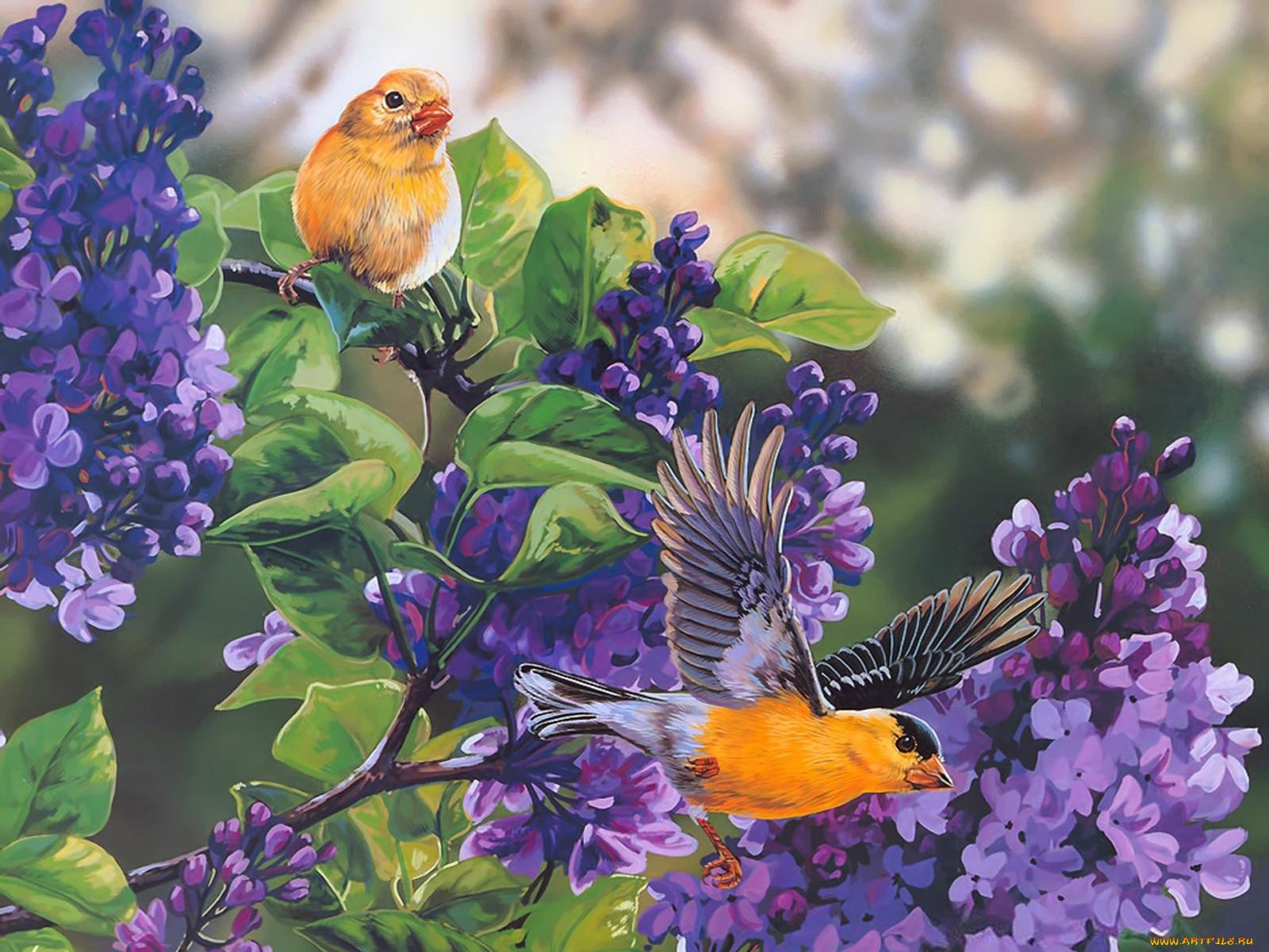 Картинки птицы блестяшки